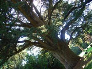 la brezza che fa frusciare i rami degli alberi