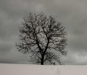 L'immenso albero della nostra genealogia